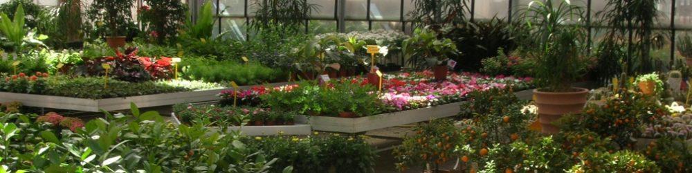 Vendita al dettaglio e negozio di fiori
